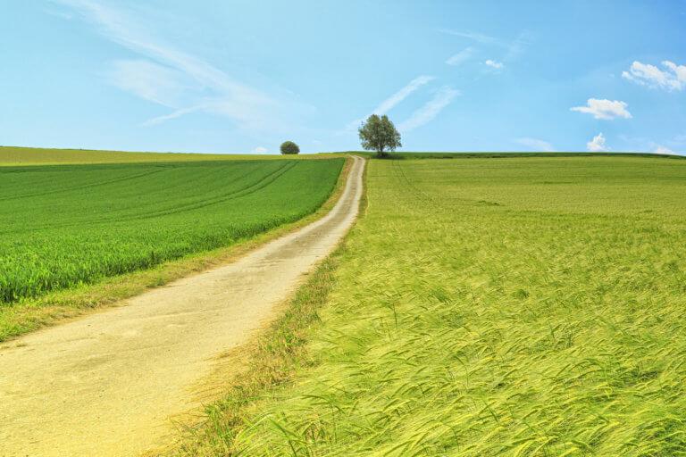 Weg zwischen Feldern mit blauem Himmel