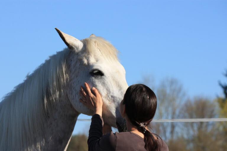 Pferd und Frau in Kontakt miteinander