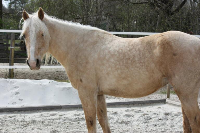 Pferd Summer