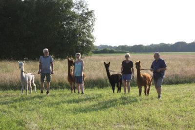 4 Personen stehen mit Alpakas auf einer Wiese